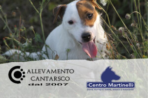 CANTARSCO E CENTRO MARTINELLI